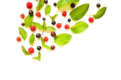 Composition with Fresh mint leaves and red raspberries and blackcurrant Stock Images
