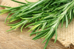 Composition with fresh rosemary Royalty Free Stock Image