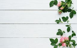 Composition of fresh roses on a white wooden background. copy space. top wiew. Composition of fresh pink roses on a white wooden background Stock Photo