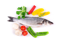 Composition of fresh seabass Stock Images