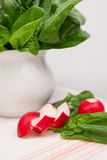 Composition with fresh spinach leaves and radishes. Still life composition with fresh spinach leaves and radishes Stock Image