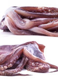 Composition of fresh tentacles of the squid Royalty Free Stock Photography