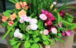 Basket of garden flowers stock images
