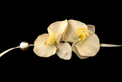 Composition from gentle orchids Stock Images