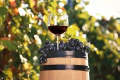 Composition with glass of red wine and ripe grapes on barrel outdoors stock images