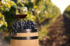 Composition with glass of red wine and ripe grapes on barrel outdoors. Space for text royalty free stock image