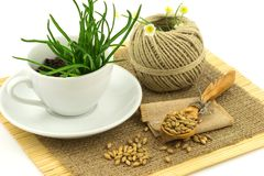 Composition from grass in the cup and plate, seeds, mat, sacking Royalty Free Stock Photo