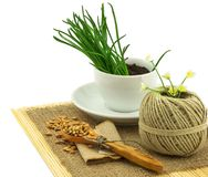 Composition from grass in the cup and plate, seeds, mat, sacking Stock Photography