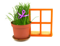 Composition with grass in the flowerpot and orange wooden window Stock Photos
