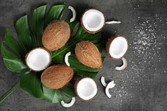Composition with green leaf and fresh coconuts. On grey background Stock Photography