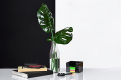 Composition. Green leaves in bottle with a book and notepad for notes on white and black background. Front view, copy royalty free stock image