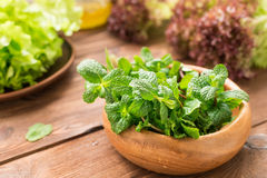 Composition of greens and mint Stock Images