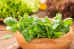Composition of greens and mint Royalty Free Stock Image
