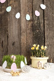 Composition for greeting card: Easter eggs, yellow crocus, grass Stock Images