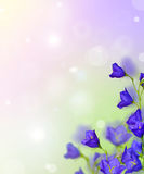 Composition with group of blue bellflowers Stock Images
