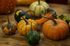 Composition with halloween pumpkins Stock Photos