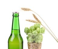 Composition of hop and barley. Royalty Free Stock Image