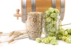 Composition of hop and barley. stock image
