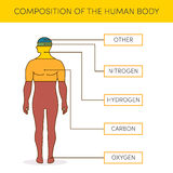 Composition of human body Stock Images