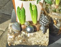 Composition of hyacinths in a wooden log Stock Photo