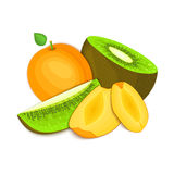 Composition of juicy apricot and kiwi. Ripe vector kiwifruit   fruits whole  slice appetizing looking. Group  tasty  for Stock Images