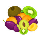 Composition of juicy apricot plum kiwi. Ripe vector apricots plums kiwifruits whole and slice appetizing looking. Group Royalty Free Stock Photography