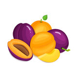 Composition of juicy plums and apricots. Ripe vector apricot  plum fruits whole  slice appetizing looking. Group  tasty Stock Photo