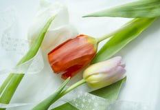 Composition légère de fête avec la belle tulipe colorée pour créer des cartes, des invitations, des insectes, des affiches ou aut Photographie stock