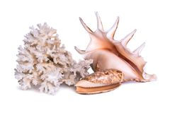 A composition of large sea shell, starfish and coral is isolated on a white background. A composition of large sea shell, starfish and coral is isolated on a Royalty Free Stock Photos