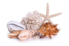 A composition of large sea shells, starfish and corals is isolated on a white Stock Photography