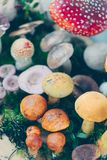 Composition with a large variety of mushroom species Stock Photos