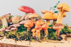 Composition with a large variety of mushroom species Stock Photography