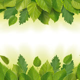 Composition of the leaves (birch, oak) stock photo