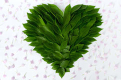 Composition of leaves and flower petals - green heart  with pink petals. Concept of love of nature and protection of environment Stock Photos