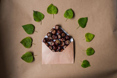 Composition with a letter and chestnuts inside and fallen Royalty Free Stock Image