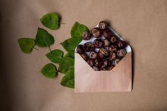 Composition with a letter and chestnuts inside and fallen Stock Photo