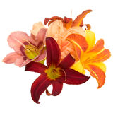 Composition from lilies Royalty Free Stock Photography