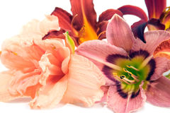 Composition from lilies Royalty Free Stock Images