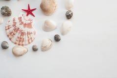 Composition marine étoile jaune et rouge Photographie stock