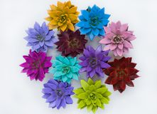 A composition multicolored succulents royalty free stock photography
