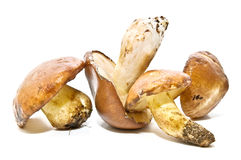 Composition with mushrooms Royalty Free Stock Photography