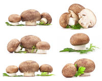 Composition of Mushrooms Stock Image