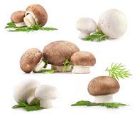 Composition of Mushrooms Royalty Free Stock Photos