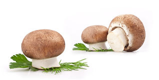 Composition of Mushrooms Royalty Free Stock Photo