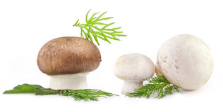 Composition of Mushrooms Royalty Free Stock Images
