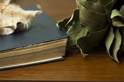 Old books, shells and dried bay leaf Royalty Free Stock Image