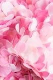 Composition onduleuse des pétales roses étonnants de textile Photos stock