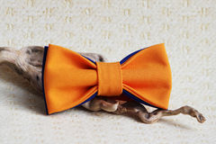 Composition: orange with a blue bow tie and a wooden stick curve on a beige background. Royalty Free Stock Images
