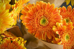 Composition of orange flowers Royalty Free Stock Photos