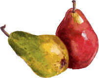Composition from pears Stock Image